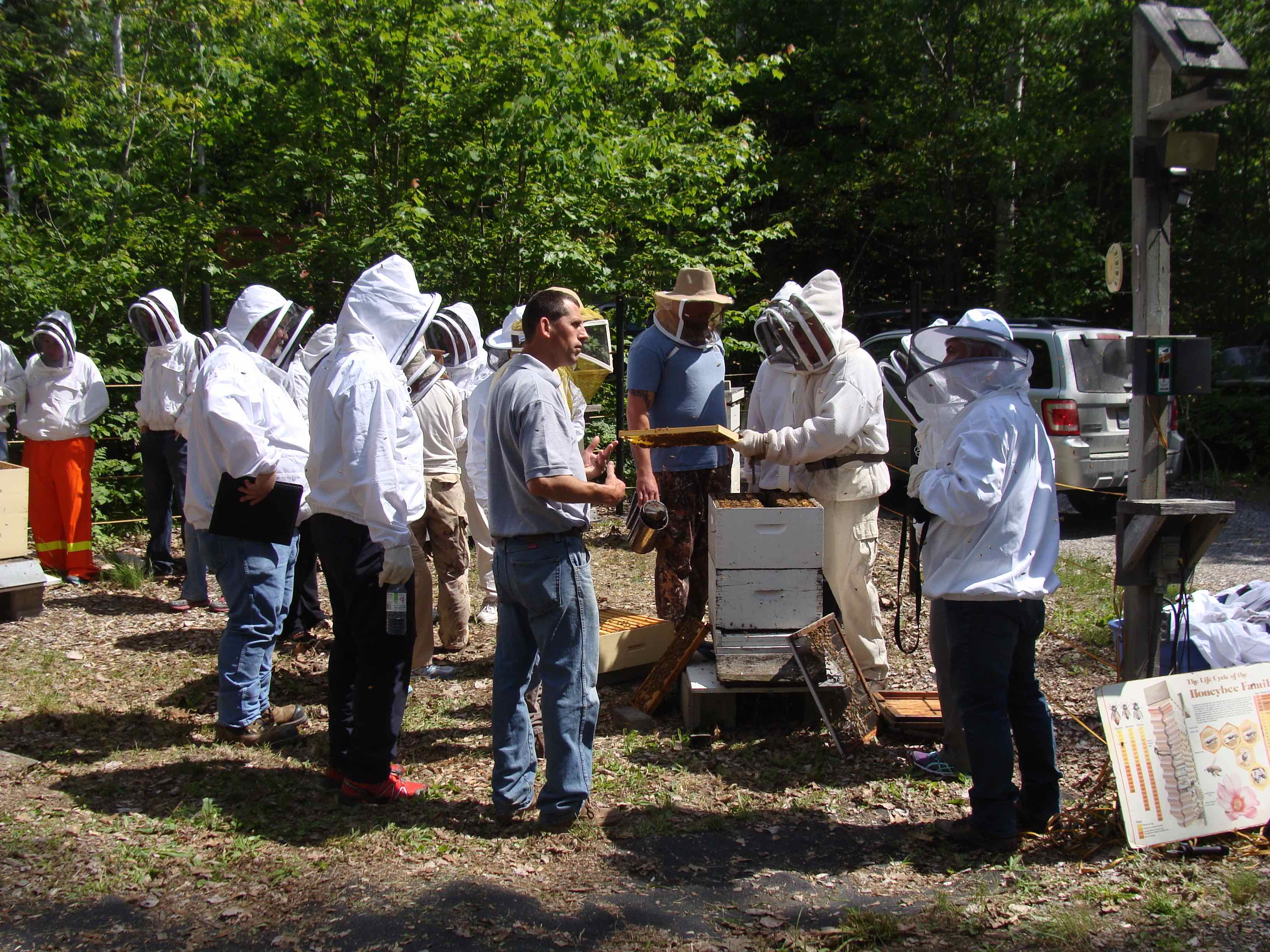 a swarm of beekeepers