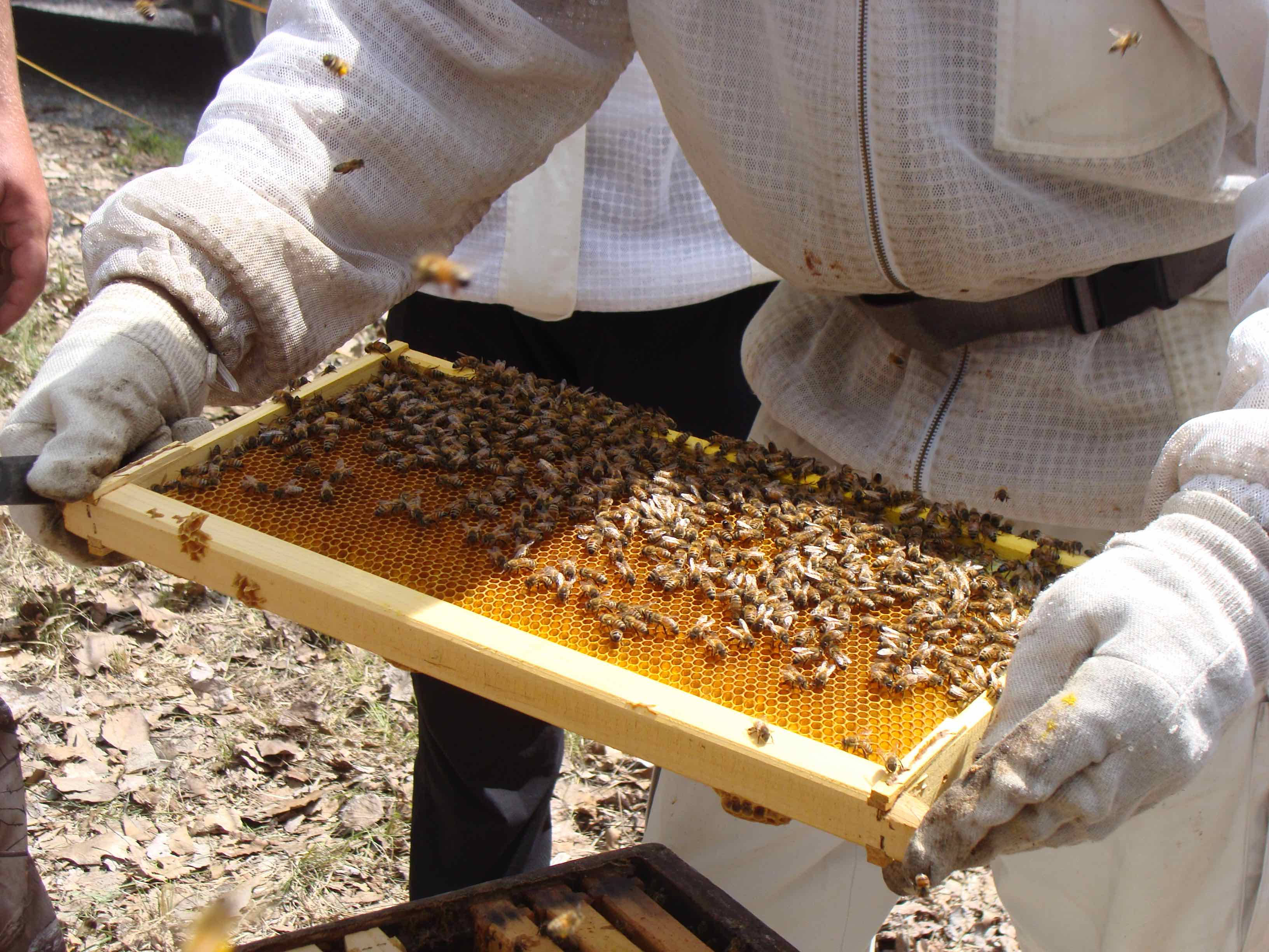 look at the bees